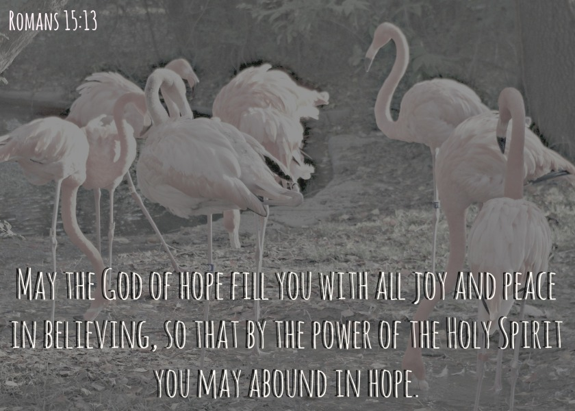joy verse of the week