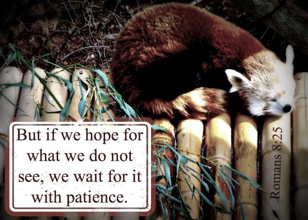 patience weekly verse
