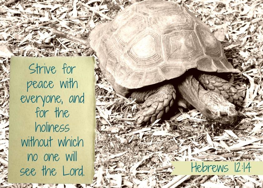 peace weekly verse