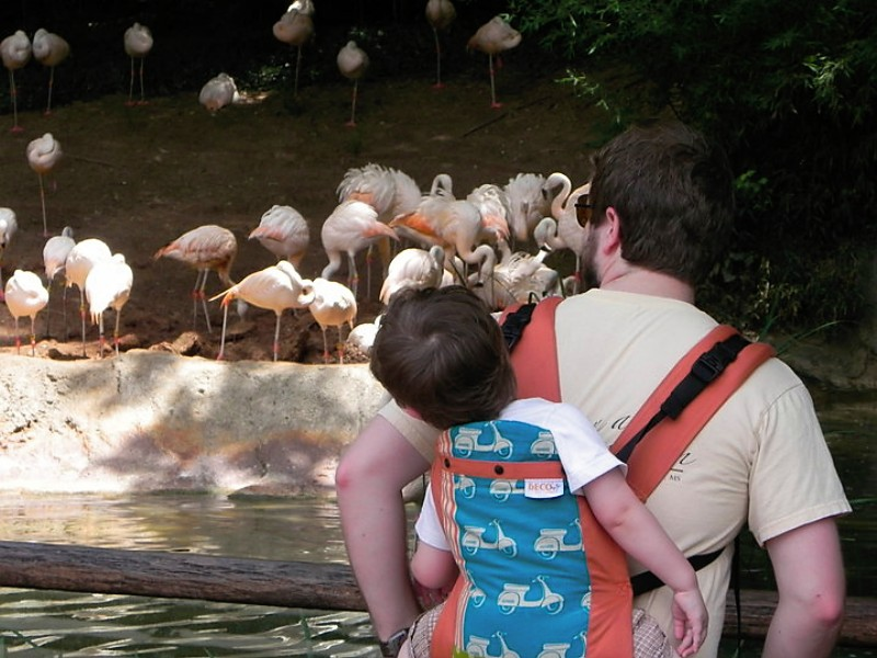 beco sees flamingos