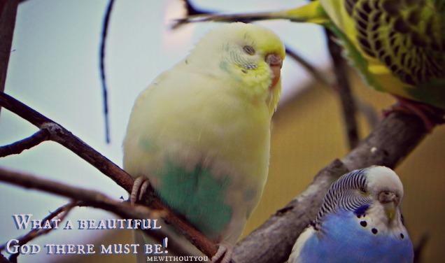 bird ad- beautiful god